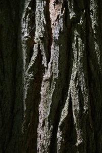 bark-141570_1920