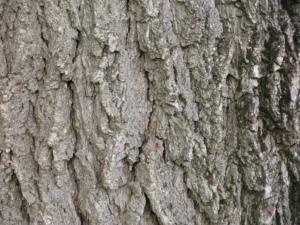 walnut-520171_1920